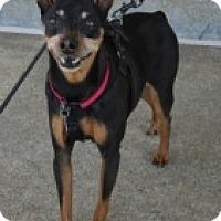 Adopt A Pet :: CUJO - Albany, NY