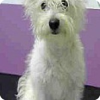 Adopt A Pet :: Sage-Adoption Pending - Boulder, CO