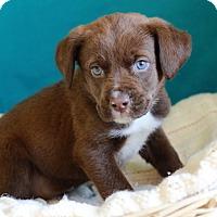 Adopt A Pet :: Stanley - Waldorf, MD
