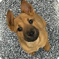 Adopt A Pet :: Elisa - Tucson, AZ