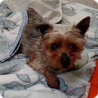 Adopt A Pet :: FAIRY PRINCESS - WOODSFIELD, OH