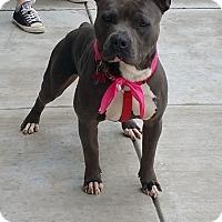Adopt A Pet :: Jugg - Southampton, PA