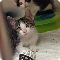 Adopt A Pet :: Petco B - Triadelphia, WV