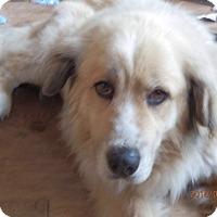 Adopt A Pet :: Baloo - Aurora, IL