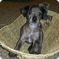 Adopt A Pet :: Apollo - Loganville, GA