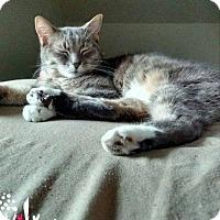 Adopt A Pet :: GiGi - Bensalem, PA