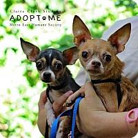 Adopt A Pet :: Charlie - Edwardsville, IL