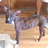 Adopt A Pet :: Winnie - Umatilla, FL