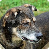 Adopt A Pet :: LeStat - Lincolnton, NC