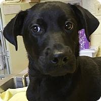 Adopt A Pet :: Retro - Orlando, FL
