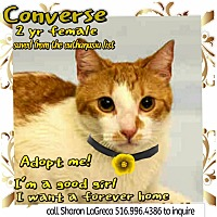 Adopt A Pet :: Converse - Bedford Hills, NY