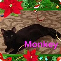 Adopt A Pet :: MONKEY - Lawton, OK
