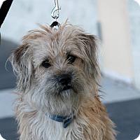 Adopt A Pet :: Benji - Palmdale, CA