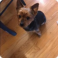 Adopt A Pet :: Flip - West Deptford, NJ