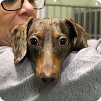 Adopt A Pet :: Layla - Waco, TX