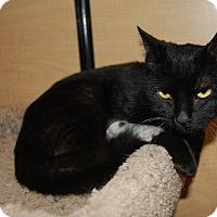 Adopt A Pet :: Palmer - Whittier, CA