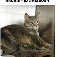 Adopt A Pet :: Archie - Palatine/Kildeer/Buffalo Grove, IL