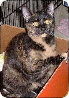 Domestic Mediumhair Cat for adoption in Stuarts Draft, Virginia - Tillie