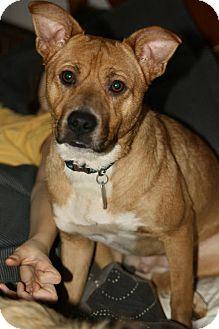 Carolina Dog Mix Dog for adoption in Sherman, Connecticut - Sandy Betty's Dog