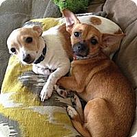 Adopt A Pet :: Charlotte - Santa Ana, CA