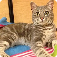 Adopt A Pet :: Candy - Foothill Ranch, CA