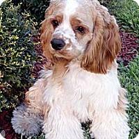 Adopt A Pet :: Nikky - Sugarland, TX