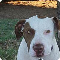 Adopt A Pet :: RJ - Blanchard, OK