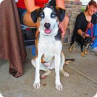 Adopt A Pet :: Snoopy - Alexandria, VA