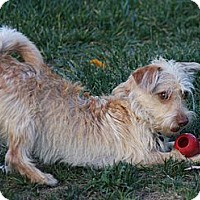 Adopt A Pet :: RILEY - Mission Viejo, CA