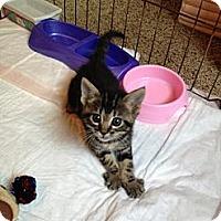 Adopt A Pet :: Muffin - San Diego, CA