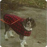 Adopt A Pet :: Todd - Tacoma, WA