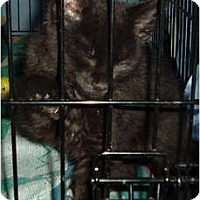 Adopt A Pet :: Sambuco - Westfield, MA