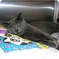 Adopt A Pet :: Mookie - New Port Richey, FL