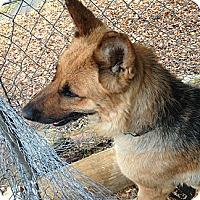 Adopt A Pet :: Tara - Mill Creek, WA