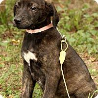 Adopt A Pet :: Sissy - Staunton, VA