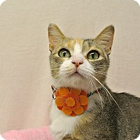 Adopt A Pet :: Jasmine - Foothill Ranch, CA