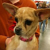 Adopt A Pet :: Whisky Lou - Fresno, CA