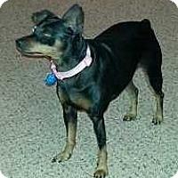 Adopt A Pet :: Cami Sue - McDonough, GA