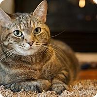 Adopt A Pet :: Foxy - Watkinsville, GA