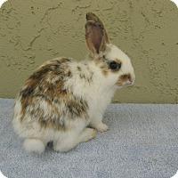 Adopt A Pet :: Kezu - Bonita, CA