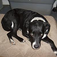 Adopt A Pet :: Rex - Dothan, AL