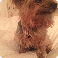 Adopt A Pet :: Mikki - Los Angeles, CA