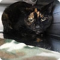 Adopt A Pet :: Doris - Elyria, OH