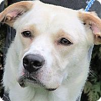 Adopt A Pet :: Lana - Germantown, MD