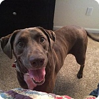 Adopt A Pet :: Heidi - Clovis, CA