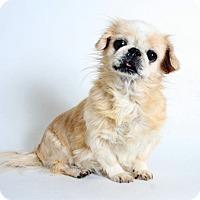Adopt A Pet :: Shelly - Redding, CA