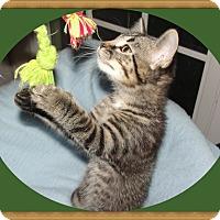 Adopt A Pet :: Woodchip - Mt. Prospect, IL