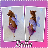 Adopt A Pet :: Bella - Pawsitive Direction - Loxahatchee, FL