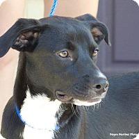 Adopt A Pet :: Lincoln - PORTLAND, ME