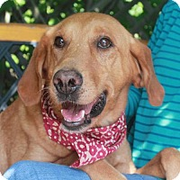 Adopt A Pet :: Goldie - Garfield Heights, OH